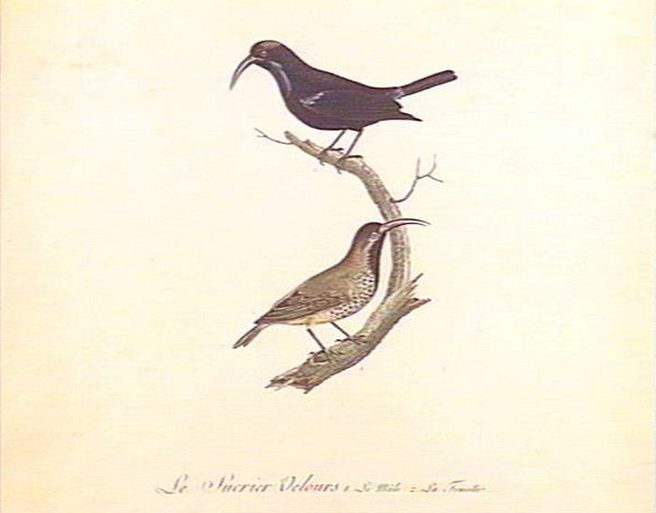 Le Sucrier Velours (1805) by Claude-Mathieu Fessard